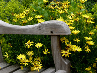 Bench with Yellow Flowers